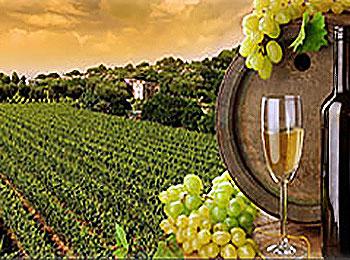 WineToursBarrelFields_resized